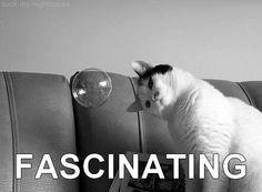 cat, bubbles, ador allergen, kitti
