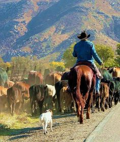 where the cars yield to the cows and cowboys....