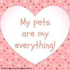 My pets are my everything!