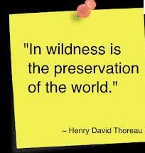 Rainforest quote Henry David Thoreau
