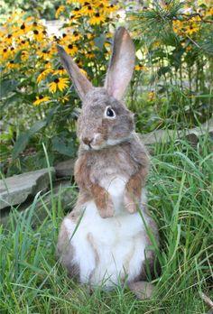 OOAK Needle felted Alpaca Life Size Cottontail Bunny Rabbit Hare Poseable Artist doll. $1,495.00, via Etsy.