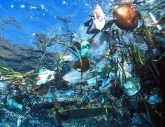 This is what is in our oceans now, and what the ocean heroes are trying to clean up.  We all should be helping, it does affect all of us.