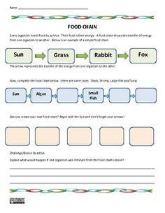 Food Chain Science Worksheet