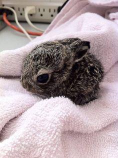 tiny rescued bunny
