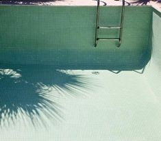 palm, swimming pools, color palettes, green, shadow, color pallettes, empty swimming pool, inspir, summer days