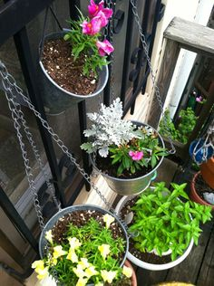 a new take on hanging baskets - 'hanging buckets'!