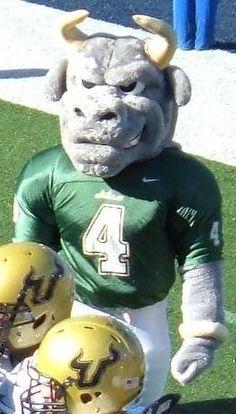 USF - University of South Florida Bulls mascot Rocky D. Bull