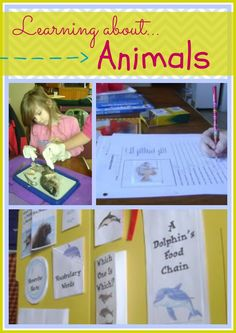 Want to study animals? Use these lesson plans with your K-3rd grade students - 18 weeks of lesson plans!