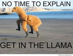 Sometimes you just have to get in the llama. Doesn't matter where we go. Just get in. #jetsettercurator