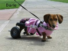 Dogs We Have Helped Get Dog Wheelchairs | National Walk 'N Roll Dog Day