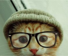 hipster, kitty cats, kitten, pet, glass, ginger cats, friend, animal, hat