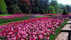 longwood garden pic   Group Visits - Longwood Gardens