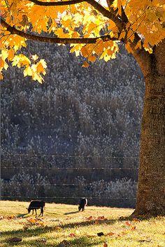 Autumn Time at the Farm