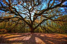These 25 Photos Of Tallahassee Will Make You Want To Move There