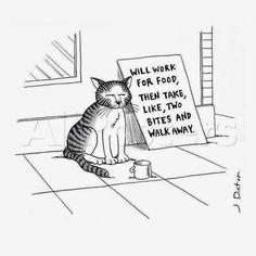 Homeless Street Cat Begging