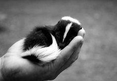 Little skunk friend