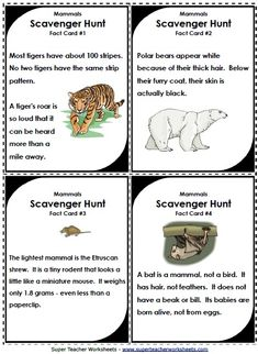 Scavenger hunts make learning about animal classifications fun!  Search for interesting animal facts hidden around your house or classroom.