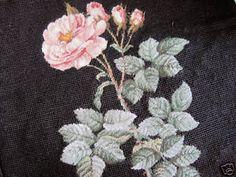 Rosa de Redoute