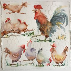 ,Who's the boss? nice watercolor, chicken art