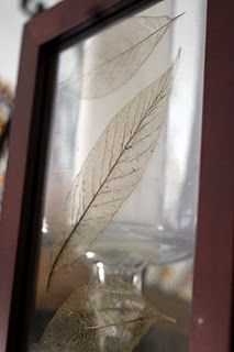 Skeleton leaves - I have major plans for these this year.  I just need to collect some leaves and get on it!