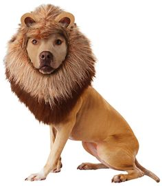 Lion Dog Costume - Dog Halloween Costumes from EntirelyPets