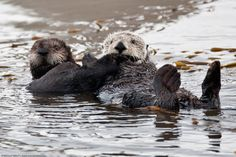 There Are No Otters Here
