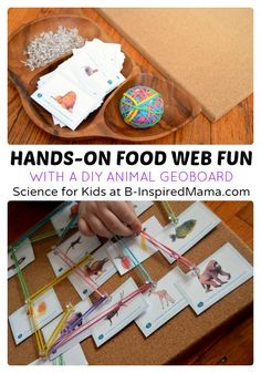 Hands-On Food Web Science for Kids - B-Inspired Mama - #kids #learning #science #binspiredmama #kbn