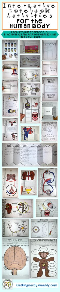 Interactive Science Notebook Activities for the Human Body- each body system is represented with 31 activities and an additional 12 title pages and KWL charts. #gettingnerdy #INB
