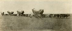 May 16, 1843: Departure of the first major wagon train from Elm Grove, Missouri towards the Pacific Northwest, via the Oregon Trail. Conestoga Wagons on the Prairie, 1860s, NYHS Image #86025d.