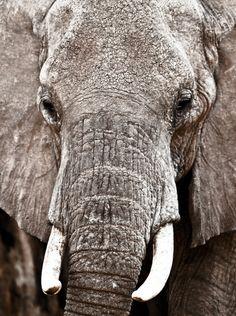 11000 kg by Jonathan Tolleneer  (Location: Kenya)