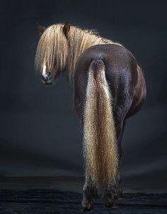 beautiful horse picturse black back ♥