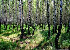 Belarusian landscape by Sergey Melnik
