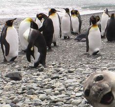Photo-bombing seal!