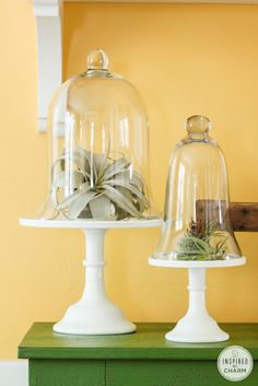 air plants, cloches and cakes stands .. oh my!