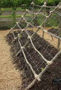 Great little trellis for your cucumbers, beans or squash - using old sticks and mesh - you could...