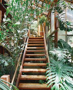 stairs, stairway, dream, plants, greenhouses, homes, jungle room, garden, heavens