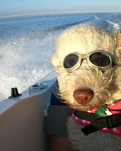 CRUSING ON A BOAT WITH BERT