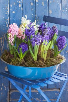 Happy as SPRING flowers in a tub!