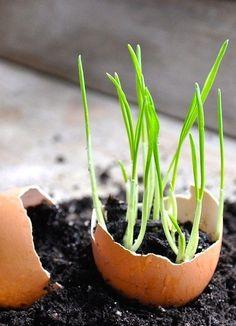 gardening hacks, garden trick, eggshel planter, garden tips, herbs garden