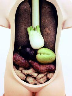 vegetable anatomy