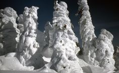 Ghost Trees - Two Top Mountain, West Yellowstone, Montana