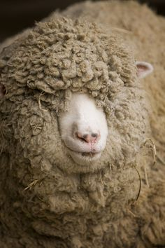 .wow - is there a sheep in there?