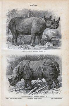 Rhino by Vintage and antique treasures, via Flickr