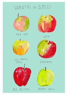 Varieties of Apples by FayeBradleyShop on Etsy, £19.95