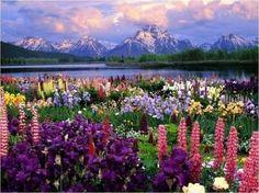 beautiful scenery amazing-nature