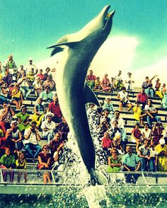 dolphin art photo vintage Florida porpoise print