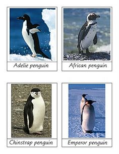 penguin 3 part cards