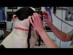 How to make a dog muzzle - YouTube