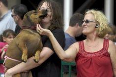 Giant weiner dog! weiner dogs, heart dachshund, dog mania