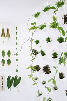green thumb, green collect, plants, leav, garden, wall planters, plant inspir